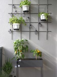 10-Tipps-kleinen-Balkon-einrichten-Pflanzen